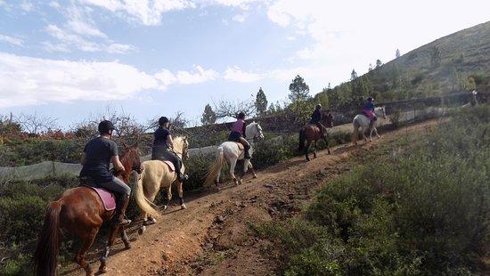 Horse Riding Tenerife