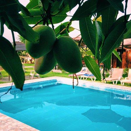 Pool - Picture of Finca Maria Luisa, Asia - Tripadvisor