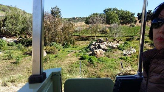 写真San Diego Zoo Safari Park枚