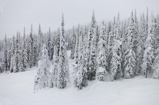 snow whiteside, mo - 550×366