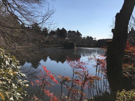 Shirakawa-cho, Japon : photo4.jpg