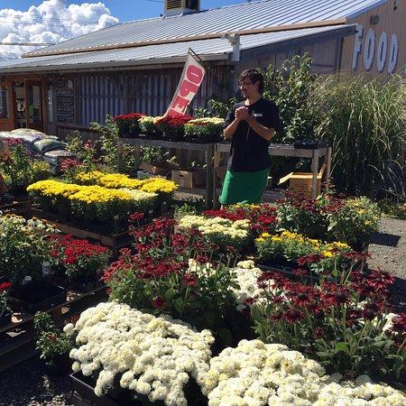 Chimacum Corner Farmstand: seasonal nursery