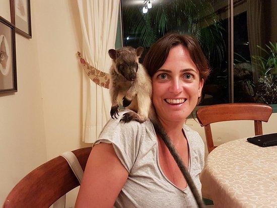 Atherton, Australia: Posto veramente incredibile, come vivere in un documentario. Per chi ama gli animali vale assolu