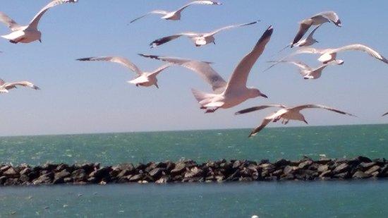 Point Samson, Australia: birdlife: birds go where the fish are
