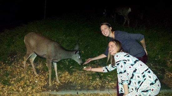 Silver Moon Inn: Apple-loving deer