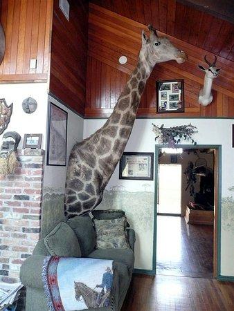 Grangeville, ID: Africa room