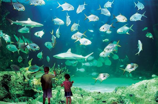 Sydney Pass: SEA LIFE Aquarium...