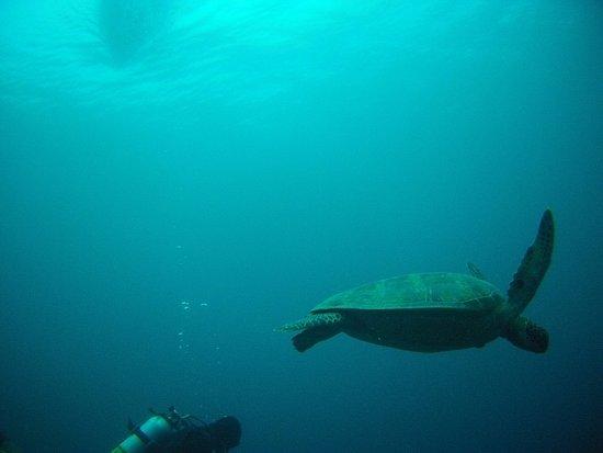 Savedra Dive Center: Слева на домашнем рифе