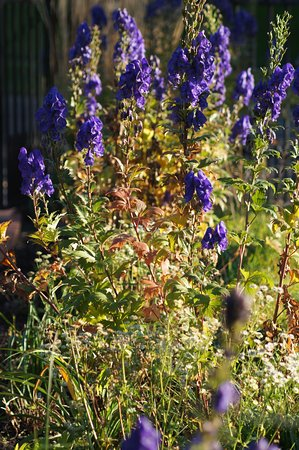Munsinger Gardens: from the flower bed planted in purple