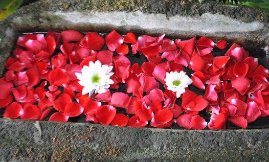 Sonya's Secret Garden: Flowers