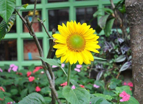 Sonya's Secret Garden: Flower