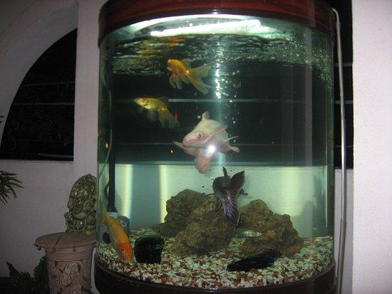 Cedar Court Bed and Breakfast : Aquarium