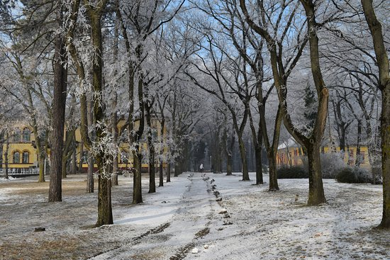 Palic, Serbia: Winter capture in Park