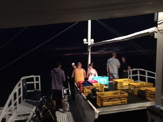 Thresher Shark Divers: 5AM - heading out to dive with thresher sharks