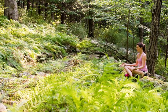 Washington, CT: Forest Bathing
