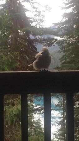 Zdjęcie Emerald Lake Lodge