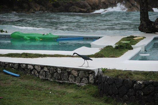 The Resort at Wilks Bay: xbjeTjDMzi0_large.jpg