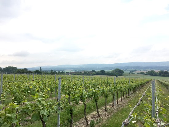 Upperton Vineyards