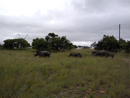 Badplaas, Νότια Αφρική: IMG_20170121_172319_large.jpg