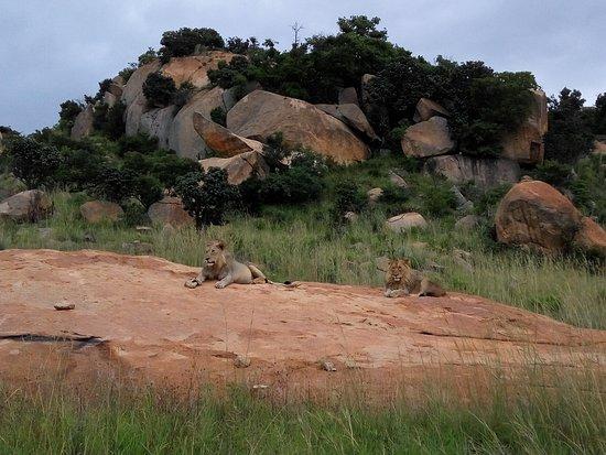 Badplaas, Νότια Αφρική: IMG_20170121_181806_large.jpg
