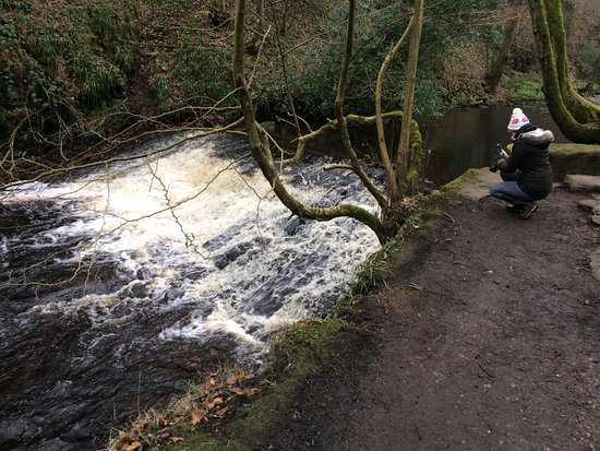 Rivelin Valley Nature Trail: photo1.jpg