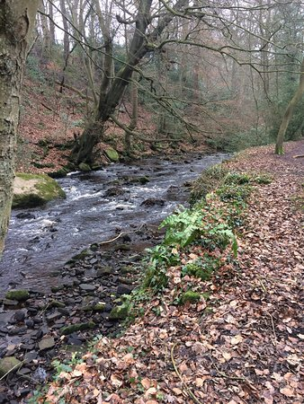Rivelin Valley Nature Trail: photo2.jpg