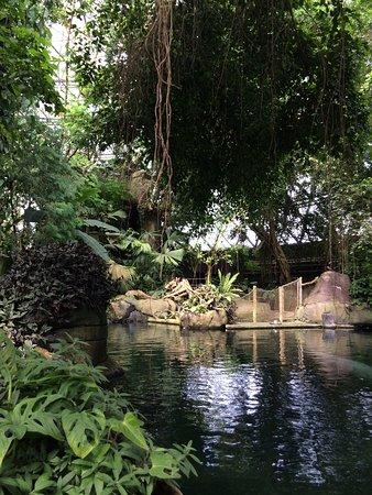 Randers Regnskov: Regnskov søen