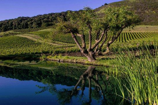 Schug Carneros Estate Winery