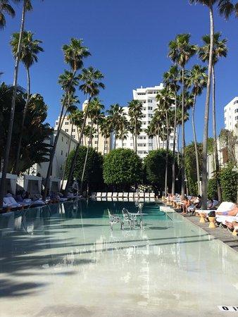 Delano South Beach Hotel: IMG_5029_large.jpg
