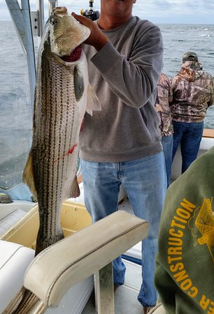 Cotuit, MA: Stripers off Chatham!
