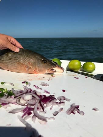 Pepe's Charters: the mangrove snapper that was about to be cheviche