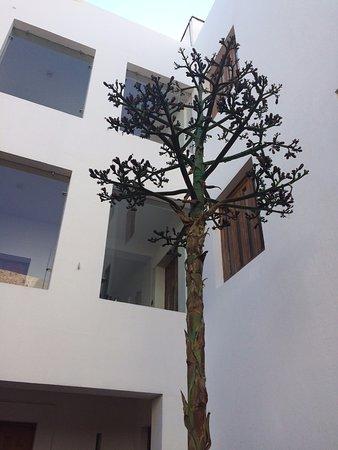 Casareyna Hotel Photo