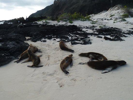 San Cristobal, Ecuador: Sea Lion