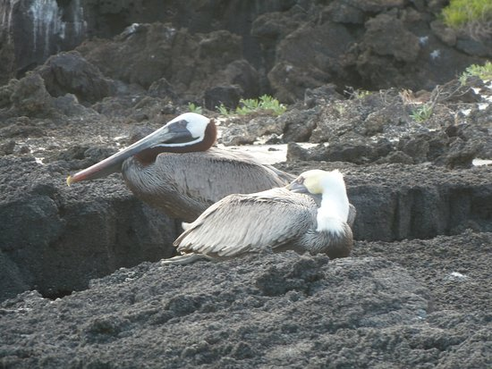 San Cristobal, Ecuador: Bird