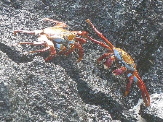 San Cristobal, Ecuador: Crabs