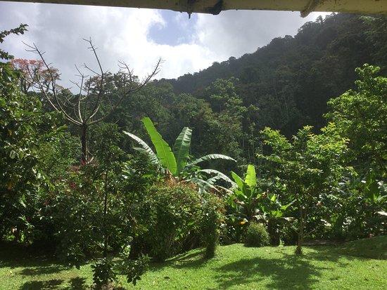 Asa Wright Nature Centre: photo6.jpg