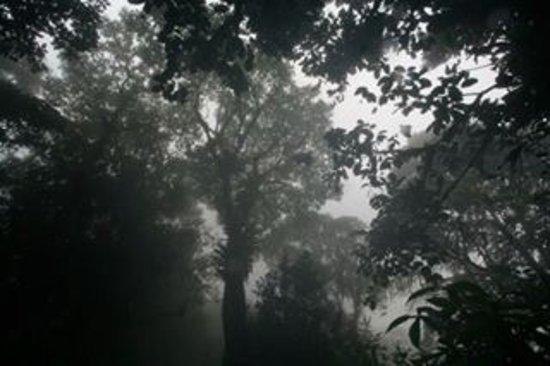 Asa Wright Nature Centre: photo8.jpg