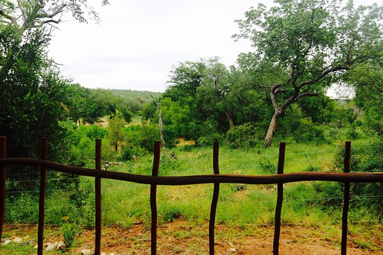Balule Nature Reserve, Sudáfrica: Rondawel 1 - view from our side window!