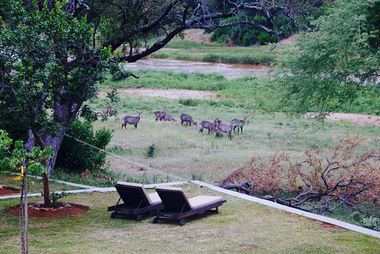 Balule Nature Reserve, Sør-Afrika: animals seen from the lodge!