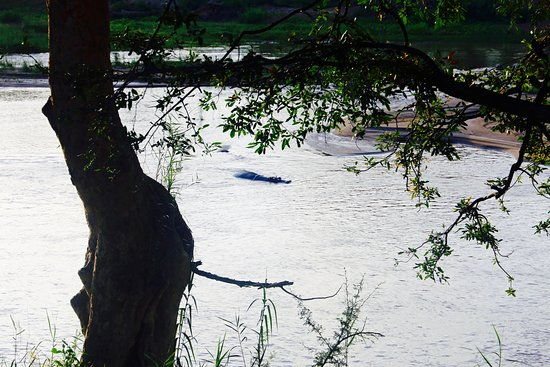 Balule Nature Reserve, Sør-Afrika: hippo seen only a few metres from the lodge!