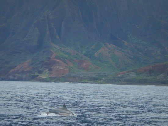 Kilauea, HI: Dolphins