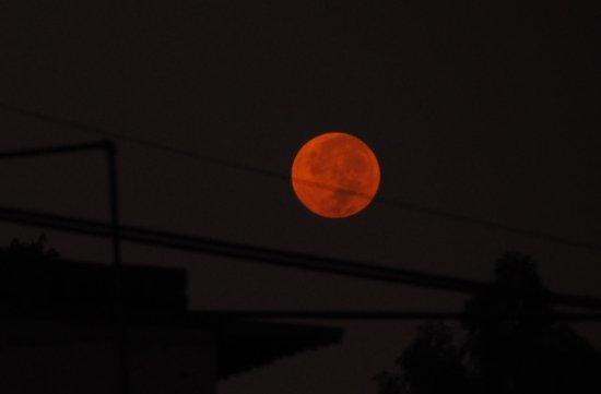 Tree Tops: A Full moon setting on my morning's awakening