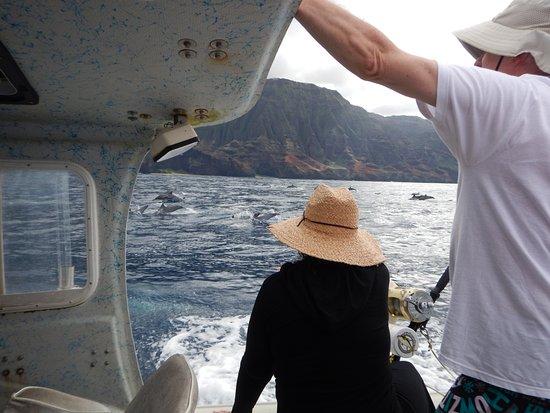 Kilauea, HI: More Dolphins