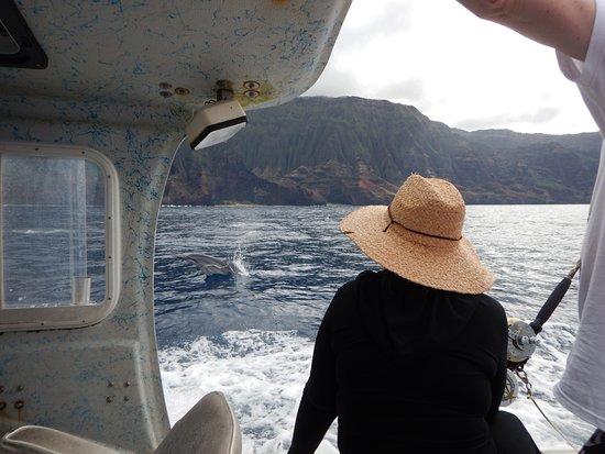 Kilauea, HI: Dolphins Wow