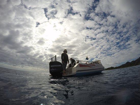 Dive Rarotonga: Karen keeping watch!