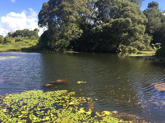 Malanda, Australien: photo1.jpg