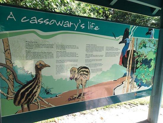 Wongaling Beach, Australia: Djiru National Park