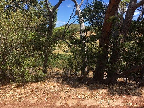 Cape Naturaliste Vineyard: photo0.jpg