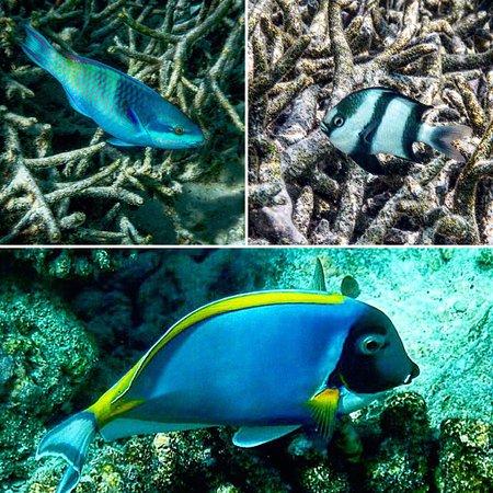 Anantara Dhigu Maldives Resort: photo1.jpg