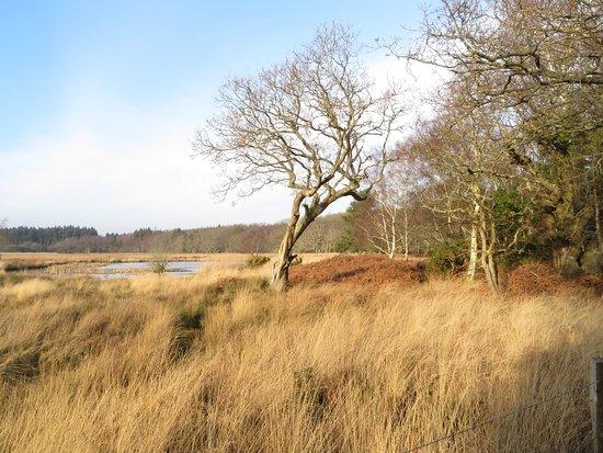 Arne, UK: photo2.jpg